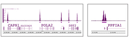 ChIP-Seq data using Histone H3K4me3