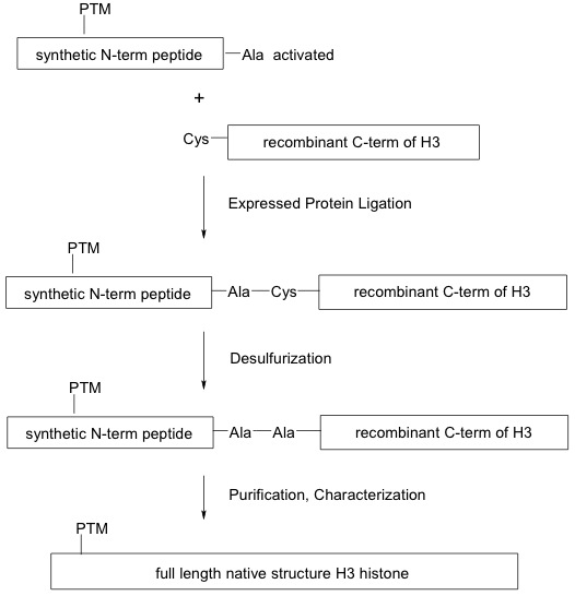 Generation of modified recombinant histones using the EPL Method