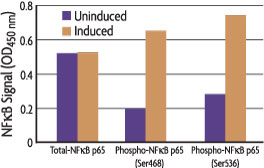 Graph measuring phosphorylation of NFkB p65 at Ser536 and Ser468 using the FACE NFkB p65 Profiler Assay