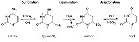 Illustration of bisulfite conversion reaction