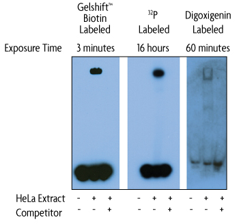 Gelshift chemiluminescent EMSA compared with radiolabeled and digoxigenin labeled assay kits