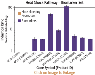 Graph showing the induction ratios of the promoter reporter constructs of the Heat Shock Biomarker Set after transfection into HT1080 human fibrosarcoma cells and induction by growing the cells at 43 degrees.
