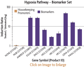 Graph showing the induction ratios of the promoter reporter constructs of the CREB Biomarker Set after transfection into HeLa human cervical cancer cells and treatment with PKA.