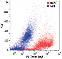 Flow cytometry dot-plot image of mouse embryonic stem cells (mESC) and mouse embryonic fibroblasts (MEF) stained with Stem Cell CDy1 Dye