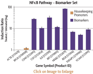 Graph showing the induction ratios of the promoter reporter constructs of the NFkB Biomarker Set after transfection into HT1080 human fibrosarcoma cells and treatment with TNF-alpha.