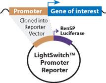 LightSwitch Promoter Reporter vector