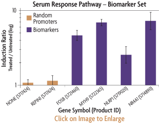 Graph showing the induction ratios of the promoter reporter constructs of the SRF Biomarker Set after transfection into serum-starved HT1080 human fibrosarcoma cells and induction of the serum response factor pathway by growing the cells in media containing 20% fetal bovine serum (FBS).