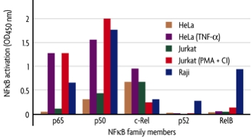 NFkB family profiling of DNA binding activation in various cell lines